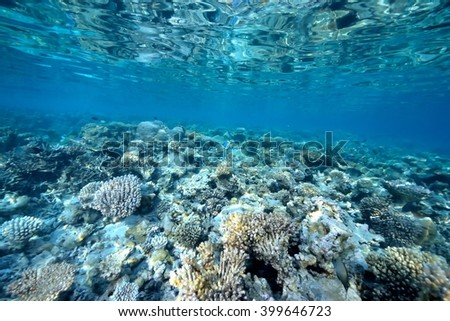 Coral reef and fish in tropical sea underwater #399646723