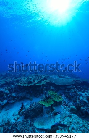 coral #399946177