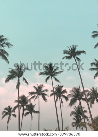 Coconut tree and blue sky at Koh Chang Thailand #399986590