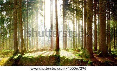 Sun rays in the forest #400067296