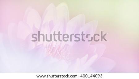 blooming lotus soft blur background in vintage pastel tones #400144093