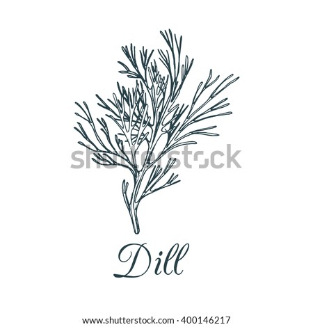 Vector dill illustration isolated. Hand drawing flavoring plant sketch. Botanical herbal card in engraving style. Condiment drawing for tag.  Royalty-Free Stock Photo #400146217