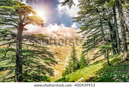 Cedars of Lebanon, beautiful ancient cedar tree forest in the mountains, amazing Lebanese nature, peaceful landscape of a National Park Reserve, Bsharre village, North of Lebanon  Royalty-Free Stock Photo #400439953