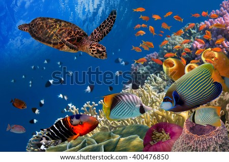 Colorful coral reef with many fishes and sea turtle. Red Sea, Egypt