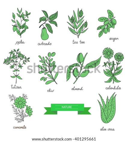 plants collection. Suitable for ads, sign boards, packaging and identity designs #401295661