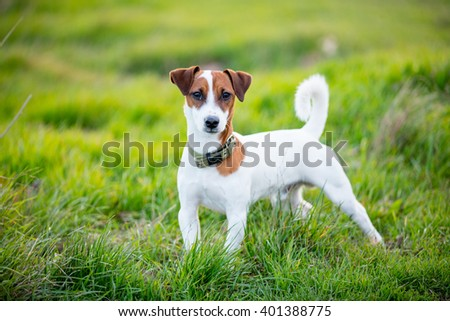photo of the cute dog walking in the park #401388775