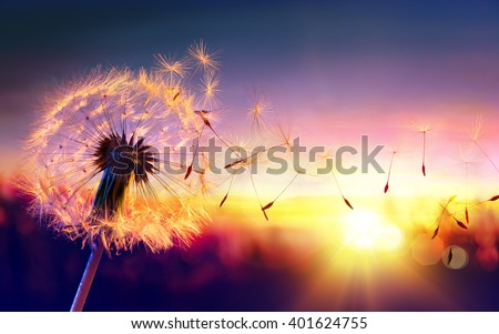 Dandelion To Sunset - Freedom to Wish  Royalty-Free Stock Photo #401624755
