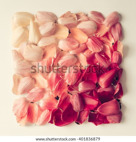 Colorful tulip petals pattern in shape of a square. Flat lay. #401836879