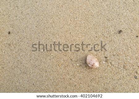 shellfish on the sand beach, Phuket Thailand #402104692