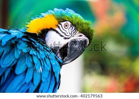 parrot macaws ( Ara ararauna) on grunge background #402179563