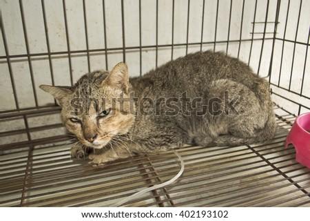 cat sick in cage #402193102