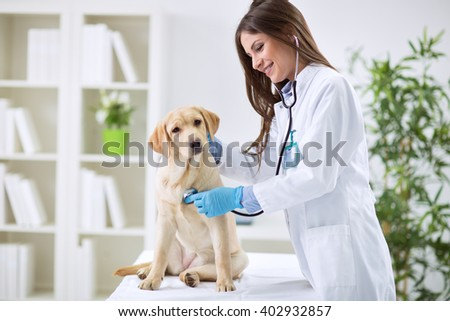 Veterinarian doctor and a labrador puppy at vet ambulance Royalty-Free Stock Photo #402932857