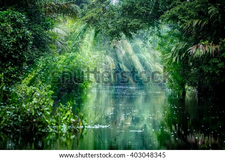 Tortuguero National Park, Rainforest, Costa Rica, Caribbean coast, Central America Royalty-Free Stock Photo #403048345