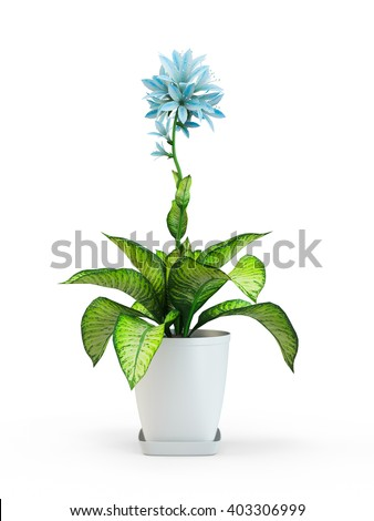 Blue star houseplant flower in pot isolated on white background. 3D Rendering, 3D Illustration. #403306999