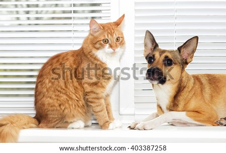 red cat and dog together on window #403387258