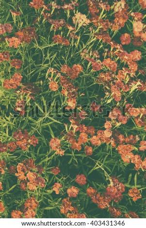 flower background, vintage tone #403431346