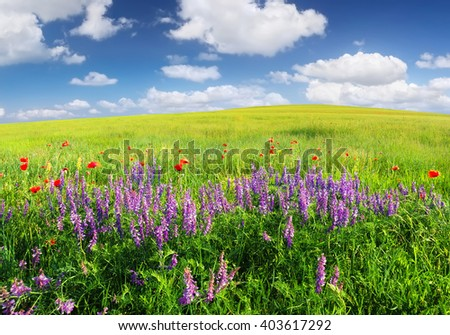 Field with flowers in mountain valley. Natural summer landscape