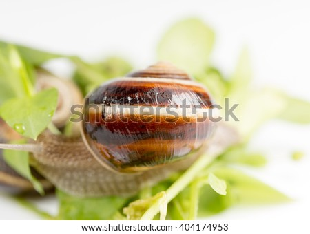 Snail on a white background #404174953