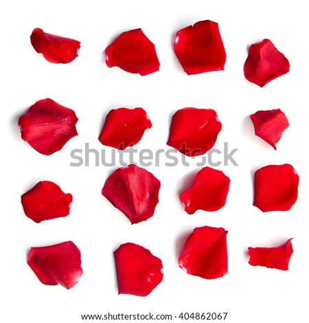 Set of 16 red rose petals on white background Royalty-Free Stock Photo #404862067