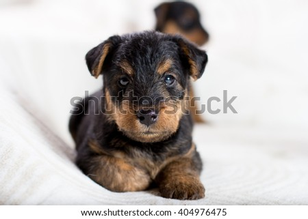 Beautiful puppy looking at the camera  #404976475