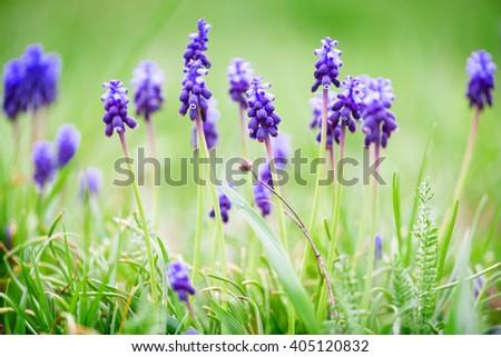 spring blue flowers #405120832