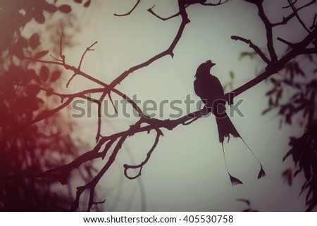 Silhouette bird on branch, process vintage tone #405530758