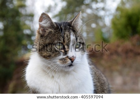 Closeup of a beautiful cat. #405597094