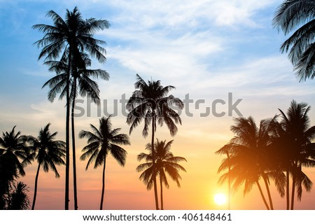 Silhouettes of palm trees against the sky during a tropical sunset. #406148461