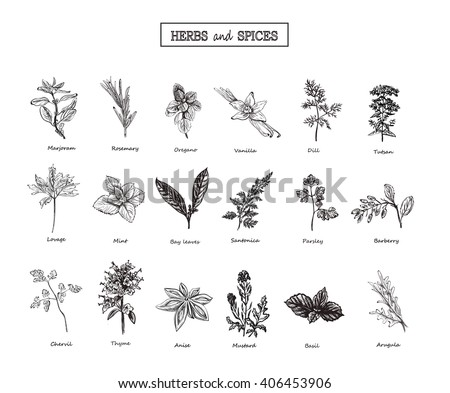 Set of Herbs and spices in sketch style. Vector illustration for your desig. Herbs and spices. herbs and spices art.herbs and spices EPS. Herbs and Wild Flowersn. #406453906
