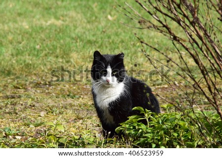 Cat behind the bushes. #406523959