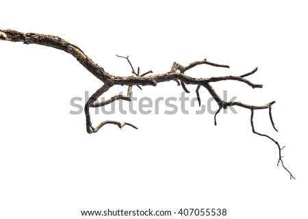 dead tree branch isolated on white background Royalty-Free Stock Photo #407055538