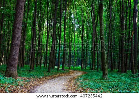 beautiful green forest #407235442