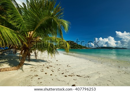 Beautiful beach with palm tree at Seychelles, Praslin, Cote d'Or #407796253