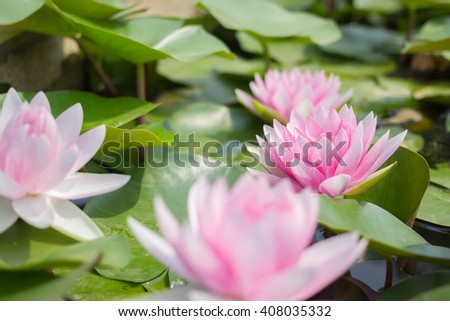 Lotus or water lily flower background #408035332