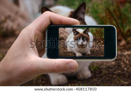 photo on the phone, the person photographed on a smartphone from the side. white cat sitting on the ground. cat with different colored eyes. selfie