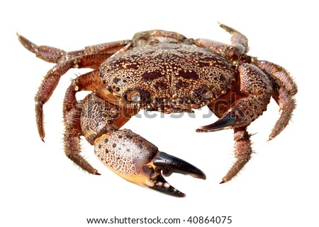 Crab isolated on white background #40864075