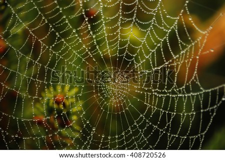 dew on a spider web Royalty-Free Stock Photo #408720526