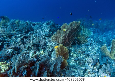 Fishes, Scuba divers and coral in tropical reef, Layang Layang #409306039