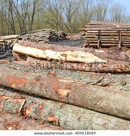 Wood preparation #409618069
