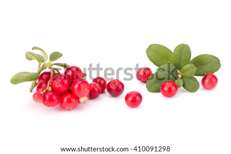Fresh hand-picked forest Cowberry isolated on white background #410091298