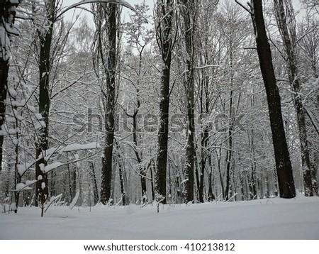 slide and bushes in the snow park in the city of Kiev in Ukraine #410213812