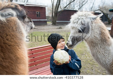 Child feeding Lama #410377528