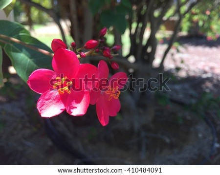 Flowers Royalty-Free Stock Photo #410484091