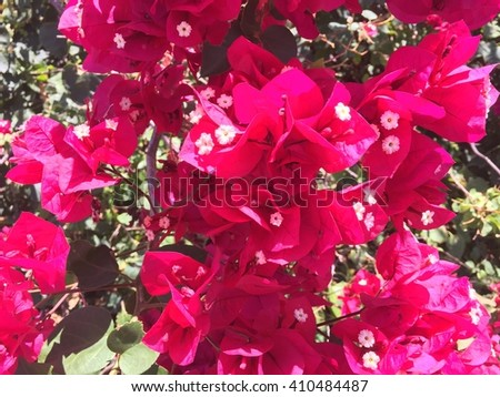 Group of flowers Royalty-Free Stock Photo #410484487