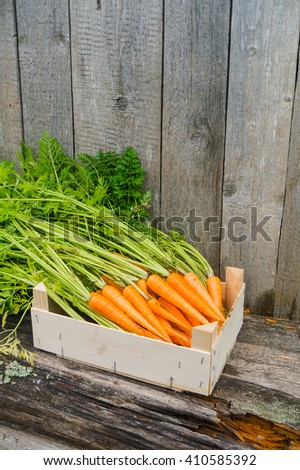 Fresh eco carrot in wooden box in the garden  #410585392