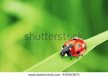 Ladybug on grass macro close up Royalty-Free Stock Photo #410963875