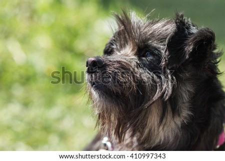 A canine on a sunny day, profile view #410997343