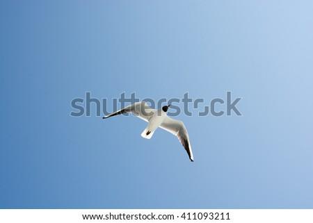 Seagulls in blue sky #411093211