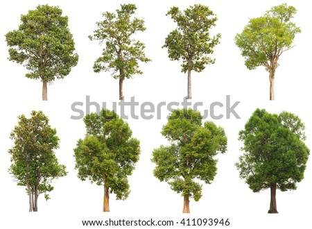 Collection of isolated tree on white background #411093946
