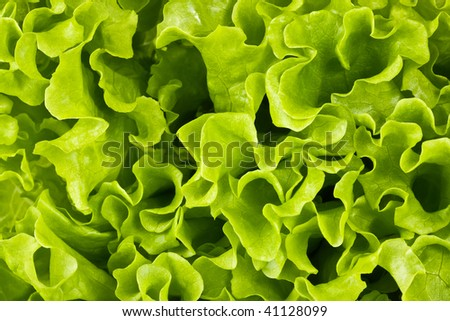 Bright green background, salad. Leaves #41128099
